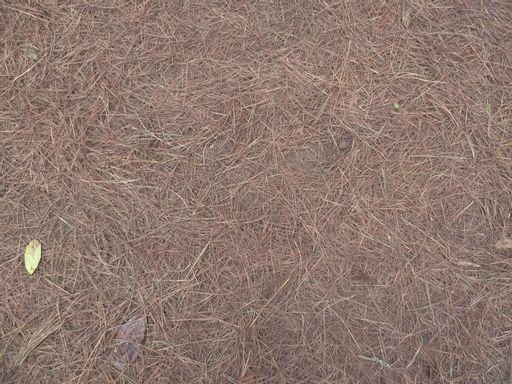 fir, ground, needle, wood