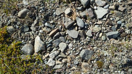 gravel, plants, rocks