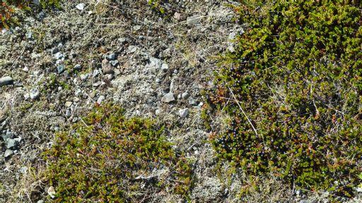 gravel, plants