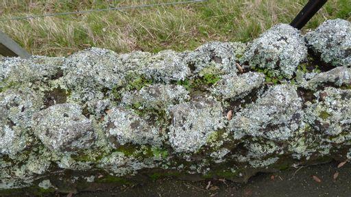 lichened, wall