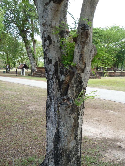 bark, plants, tree