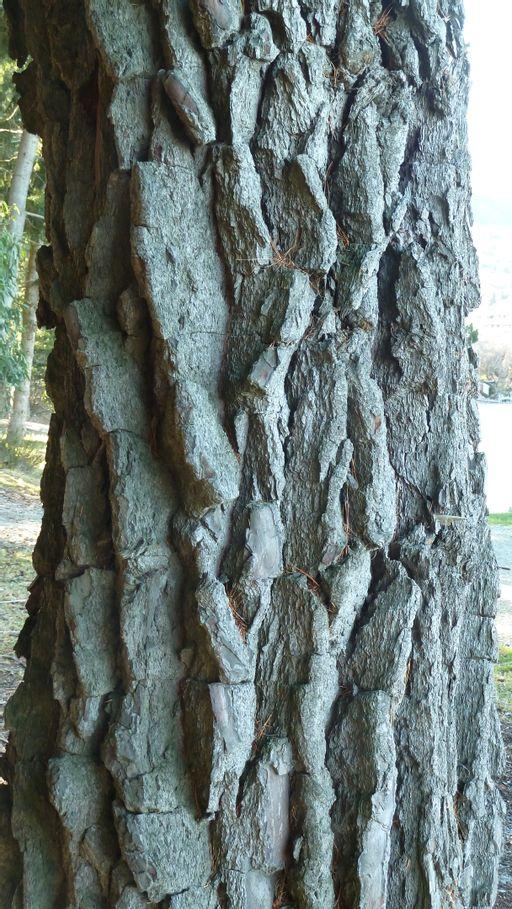 bark, tree