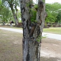 bark, plants, tree