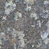 lichened, rock